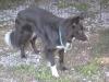 Doggels 041