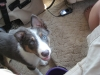 Watkins Glen 2008 073